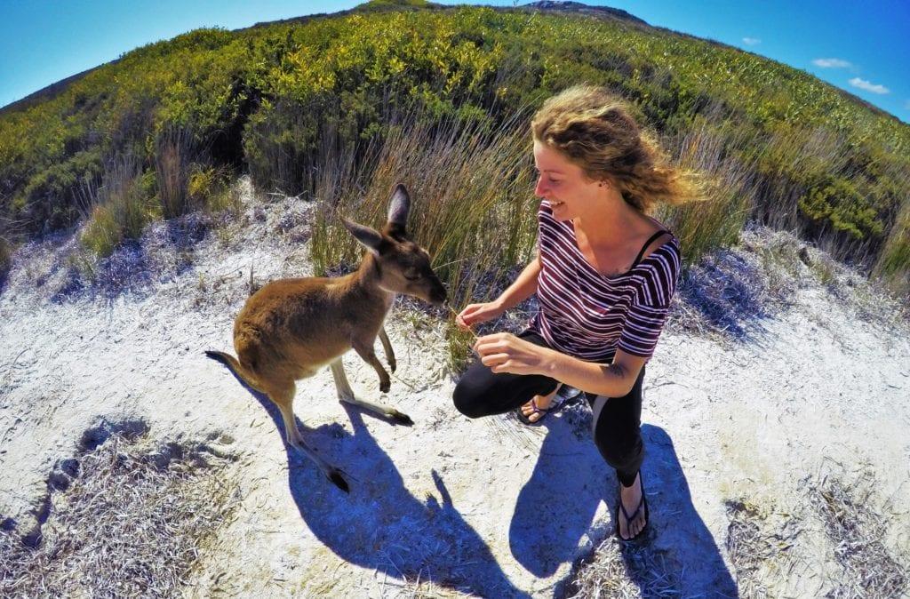 kangaroos Australia