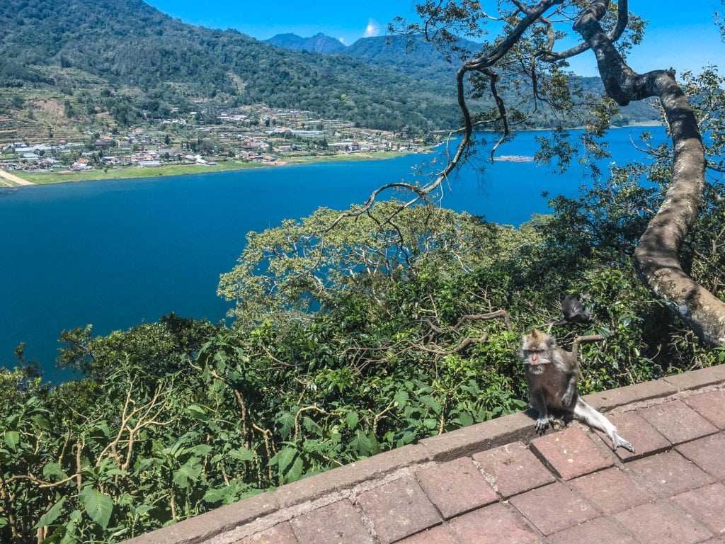 Monkey Bali | Twin Lake Munduk