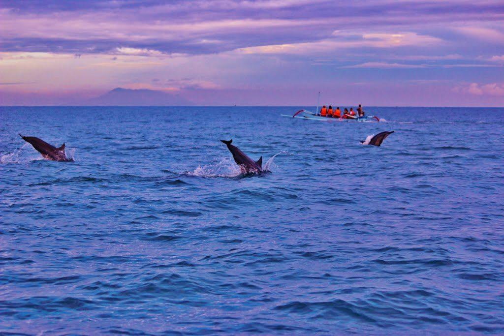 Lovina Dolphins Bali