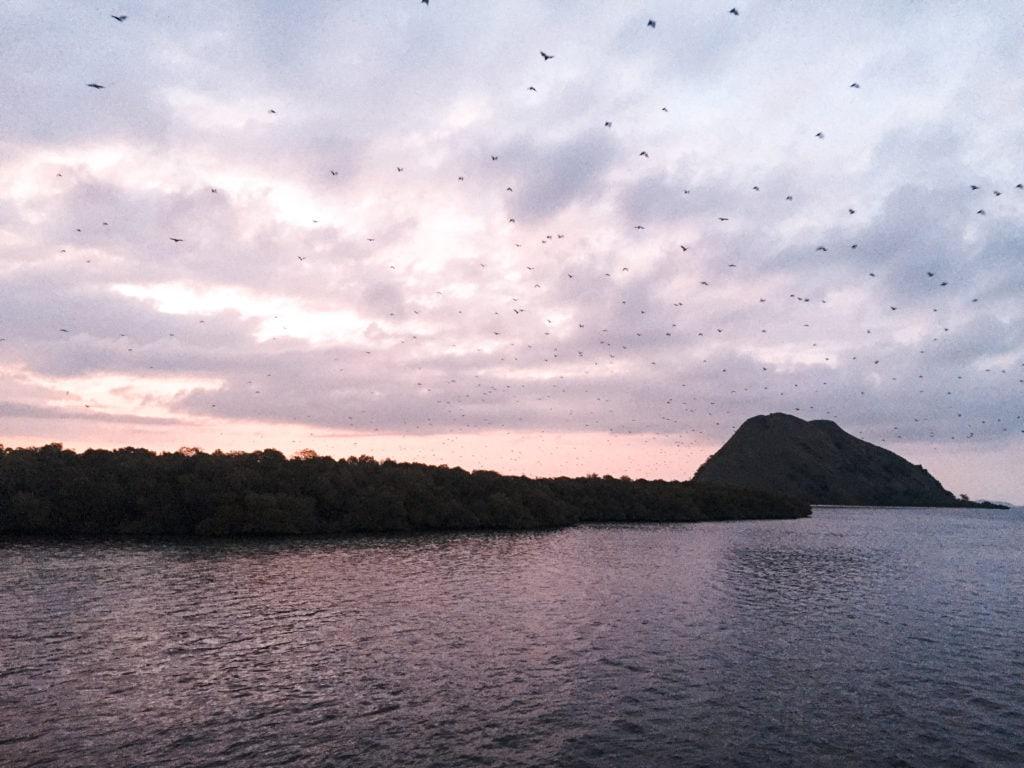 IMG_1489-1024x768 ▷ No te olvides de visitar el Parque Nacional Komodo mientras estés en Indonesia