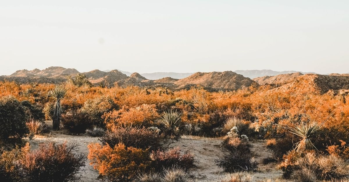 Joshua Tree in a day