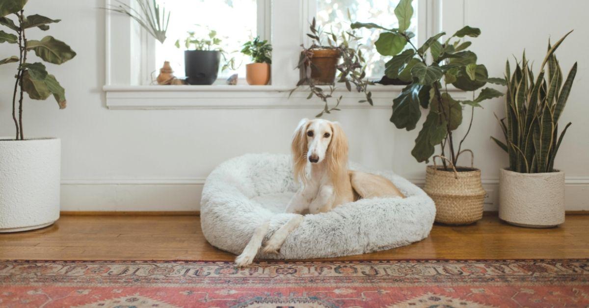 Pet sitting in Europe